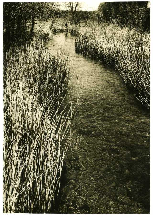 Rivière. sur papier warmtone Ilford